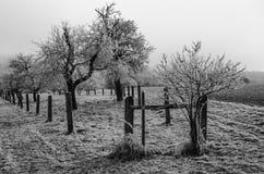 Bereifte Bäume Lizenzfreie Stockfotografie