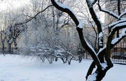 Bereifte Bäume Lizenzfreie Stockfotos