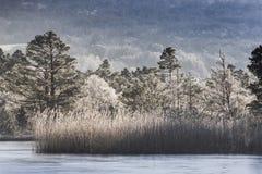 Bereifte Bäume auf Loch Garten in Schottland Stockfotos