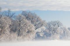 Bereifte Bäume im Nebel Lizenzfreies Stockfoto