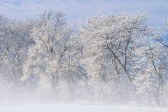 Bereifte Bäume im Nebel Stockfoto