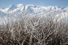 Bereifte Büsche vor einem schönen Wintergebirgsschnee scape Stockfotos
