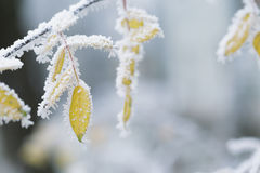 Bereifte Baumaste in der Winterdiabewegung Lizenzfreies Stockbild