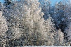 Bereifte Baumniederlassungen Stockbilder