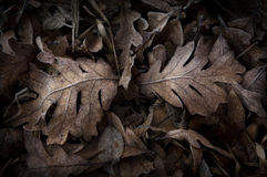 Bereifte Blätter Stockfotos