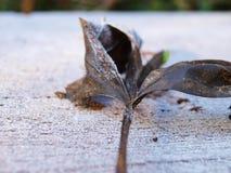 Bereifte Blätter auf der schneebedeckten Tabelle Stockbild