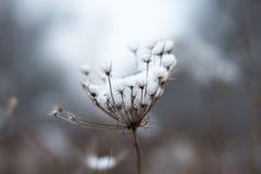 Bereifte Blume Stockfotos