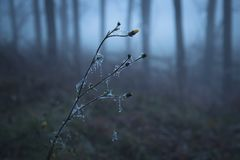 Bereifte Blume im Wald Lizenzfreies Stockbild