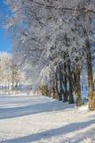 Bereifte Buchenbäume Stockfoto
