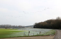 Bereifte Floodplains nahe Cortenoeversebrug, Zutphen Stockfotos