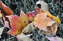 Bereifte Herbst-Blätter Stockfotografie