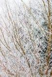 Bereifte Niederlassungen auf Baum während des Winters Stockfotos