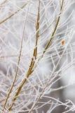 Bereifte Niederlassungen auf Baum während des Winters Stockbild