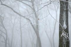 Bereifte Niederlassungen im Nebel Stockbild