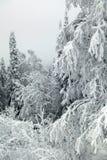 Bereifte Niederlassungen von Bäumen gegen einen grauen Himmel Stockbild