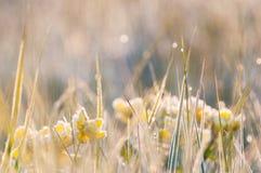 Bereifte Vorfrühlingsblumen im Gras lizenzfreie stockfotografie