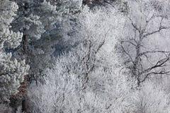 Bereifte Winter-Küstenlinie Lizenzfreie Stockfotografie
