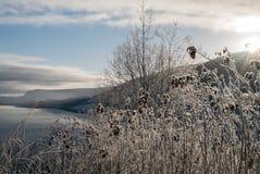 Bereifte Winterlandschaft in der kalten Temperatur mit Eis- und Hoarfrost auf See, Raureif auf den klaren, gefrorenen Blättern un stockbilder