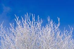 Bereifter Baum Lizenzfreie Stockbilder