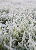 Bereiftes grünes Gras stockbild