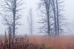 Bereiftes hohes Gras-Grasland im Nebel Stockfoto