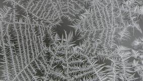Bereiftes Spinnen-Netz auf einem Fenster Stockfotos