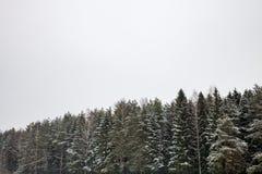 Bereiftes Winter-Holz Lizenzfreies Stockfoto