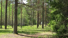 Bereite Datei der schönen Waldschleife stock video