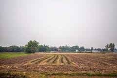 Bereiten Sie Boden für wachsendes Gemüse vor Lizenzfreie Stockfotografie