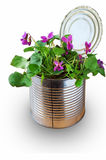 Bereiten Sie von einer alten Blechdose als Vase für einzelne Blumen auf Stockbild