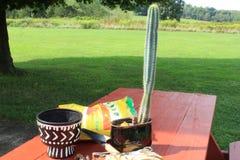 Bereiten Sie vor, um einen Kaktus zu verpflanzen Stockfotografie