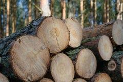 Bereiter Brennholzstand im Wald Lizenzfreie Stockfotos