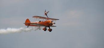 Bereitling Flügelwanderer Lizenzfreies Stockfoto