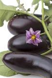 Berenjena tres y una flor Fotos de archivo libres de regalías