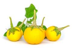 Berenjenas amarillas frescas Imagen de archivo libre de regalías