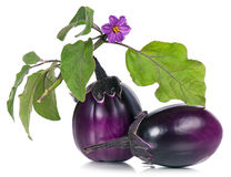 Berenjenas púrpuras frescas Imagenes de archivo