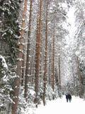 bereta błękitny nakrętki żakieta ojca zielonej kurtki mum czerwona syna spaceru zima Zdjęcia Stock
