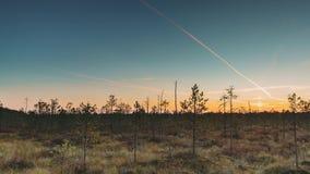 Berezinsky,生物圈储备,白俄罗斯 秋天与沼泽沼泽的黎明风景在日落期间 黑暗的树剪影 股票录像