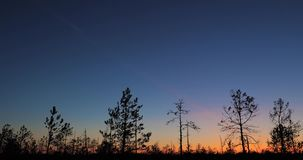Berezinsky,生物圈储备,白俄罗斯 秋天与沼泽沼泽的黎明风景在日落期间 黑暗的树剪影 影视素材