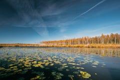 Berezinsky, Biosphere Reserve, Belarus. Autumn Landscape With La royalty free stock image