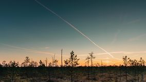 Berezinsky, reserva de la biosfera, Bielorrusia Autumn Dawn Landscape With Marsh Swamp durante puesta del sol Siluetas oscuras de metrajes