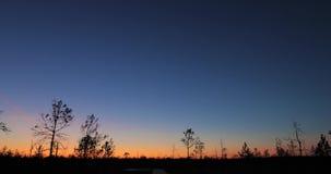 Berezinsky, reserva de la biosfera, Bielorrusia Autumn Dawn Landscape With Marsh Swamp durante puesta del sol Siluetas oscuras de almacen de video