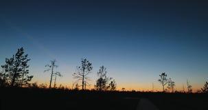 Berezinsky, reserva de la biosfera, Bielorrusia Autumn Dawn Landscape With Marsh Swamp durante puesta del sol Siluetas oscuras de almacen de metraje de vídeo