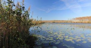Berezinsky, reserva de la biosfera, Bielorrusia Paisaje del otoño con el río del lago almacen de video