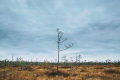 Berezinsky, riserva di biosfera, Bielorussia Autumn Landscape With Ma fotografie stock