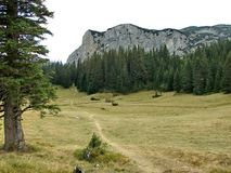 Bergäng med skogen Royaltyfri Bild
