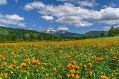 Bergängen blommar orange sommar Arkivfoton