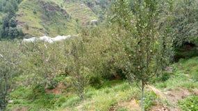 Bergäpplen Shimla royaltyfria bilder