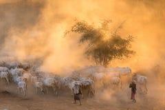 Bergère birmanne en poussière Photo libre de droits