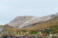 Bergöverkant med fågelfristaden på sju öar Arkivbilder